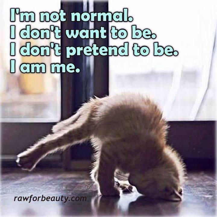 not nromal cat